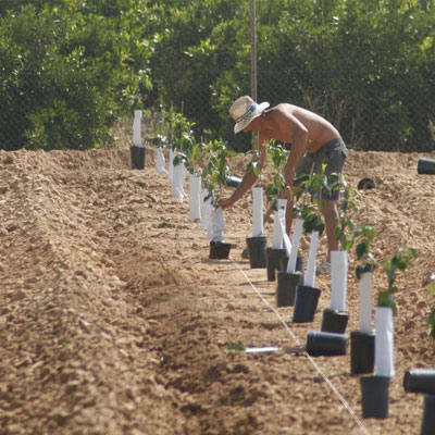 Cultivation and care of new varieties