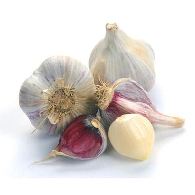 Bunch Fist of garlic