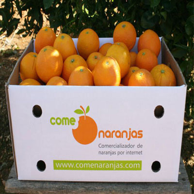 Field oranges harvested in box for shipping