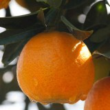 Clementinas (kg)